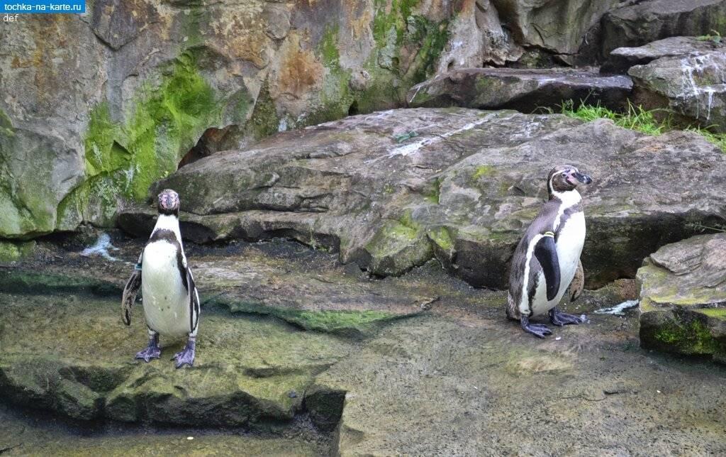 Берлинский зоопарк: самые удивительные животные