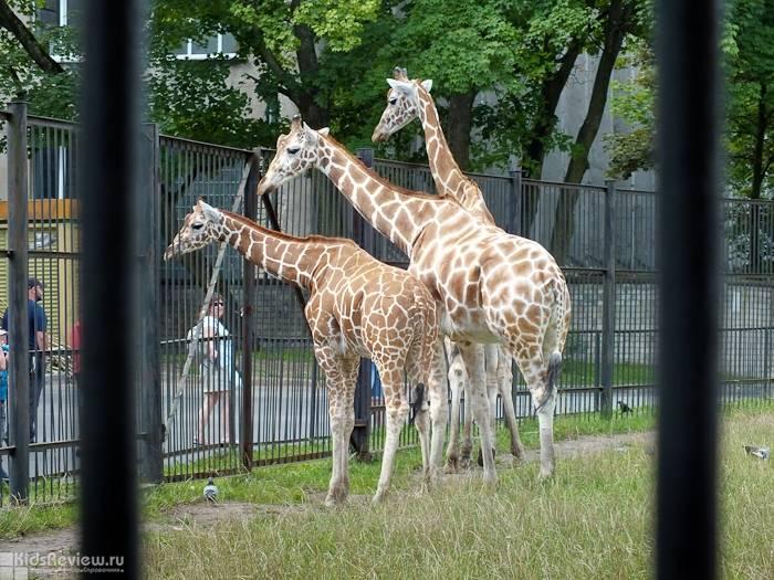 12 самых необычных зоопарков :: инфониак