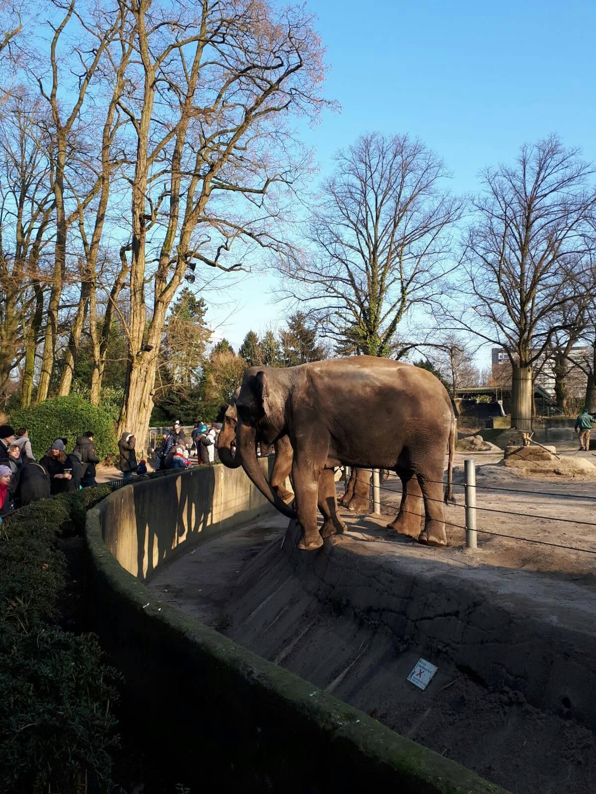Зоопарки гамбурга