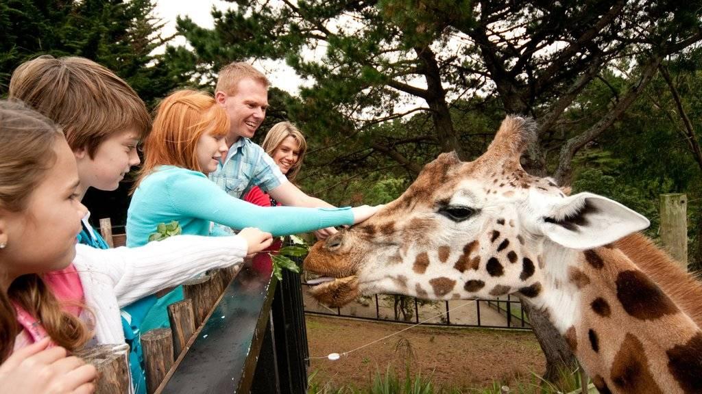 Лучшие зоопарки мира. самый большой контактный зоопарк