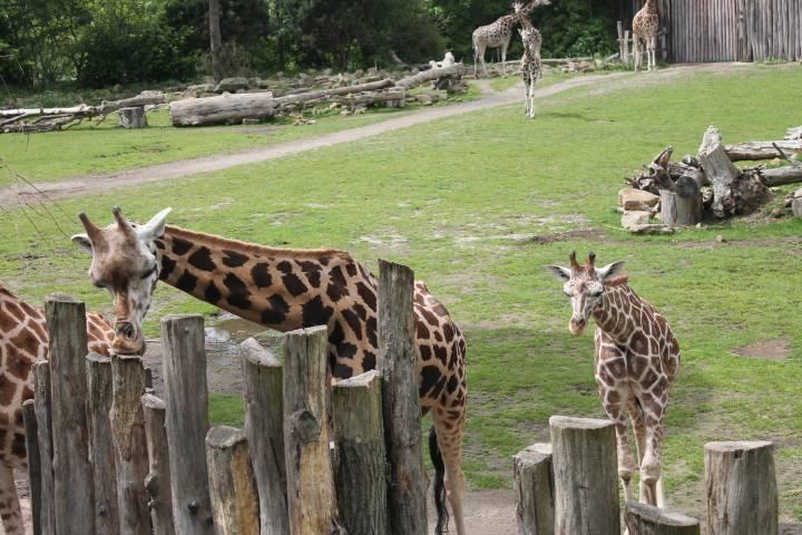 Зоопарки в германии - фото, описание зоопарков в германии