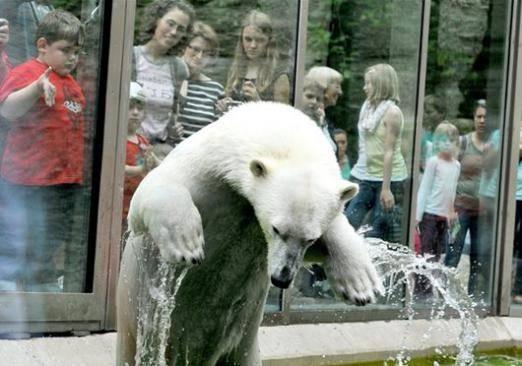 Чудо-зоопарк станет островом для животных спяти континентов