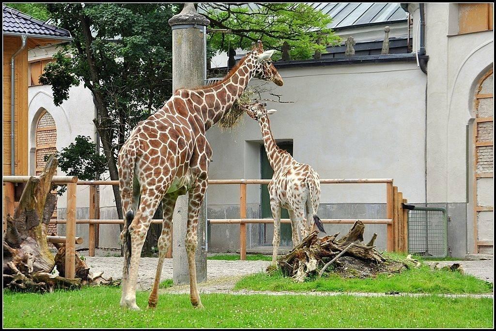 Зоопарк в будапеште. сайт, цены, отзывы, фото, как добраться, отели – туристер.ру