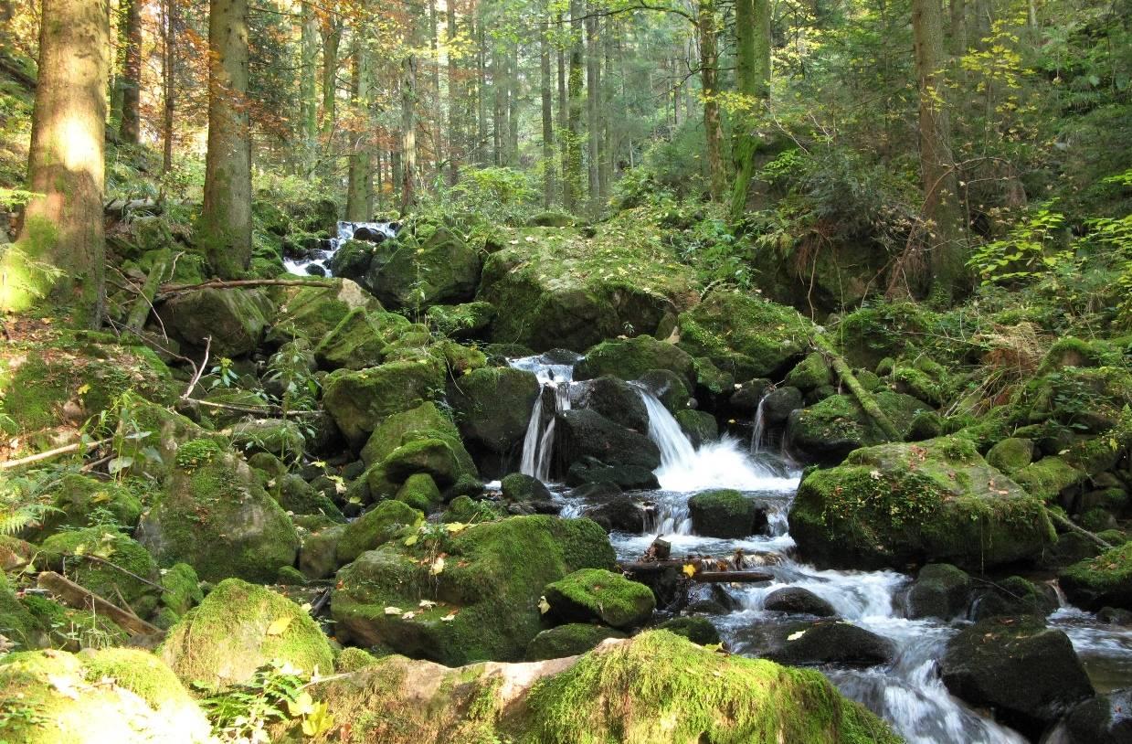 Национальный парк баварский лес