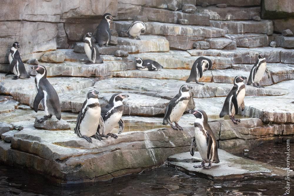 Зоопарк в кругу своих задач сквозь призму исторического экскурса и реальности