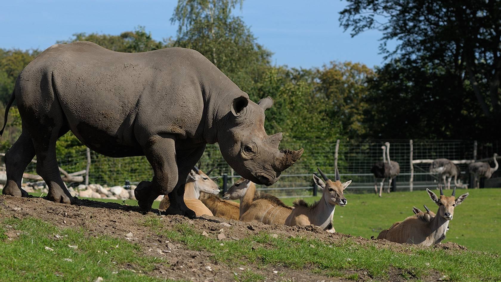 Зоопарк Ганновера – парк впечатлений и неожиданностей
