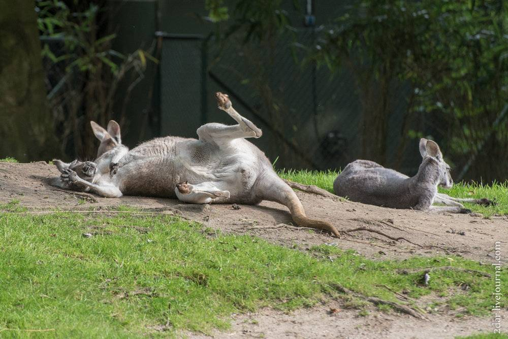 Гамбургский зоопарк: путешествие в мир дикой природы