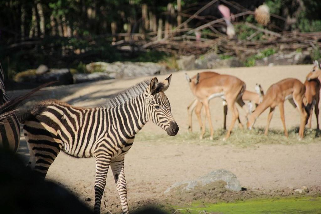 50 интересных фактов о разных зоопарках мира и их  животных — общенет