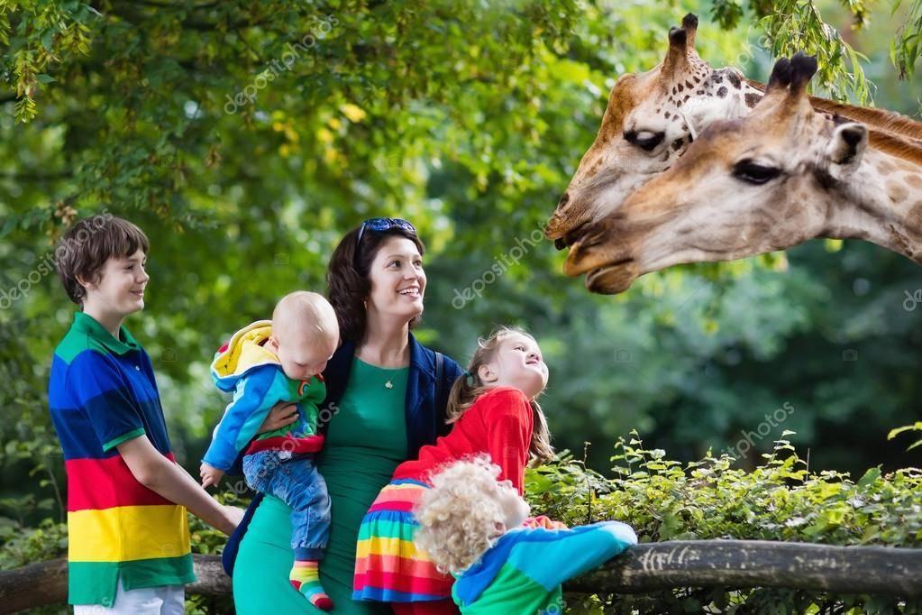 Лучшие контактные зоопарки