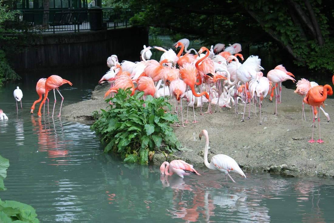 Зоопарк в Мюнхене – фауна пяти континентов