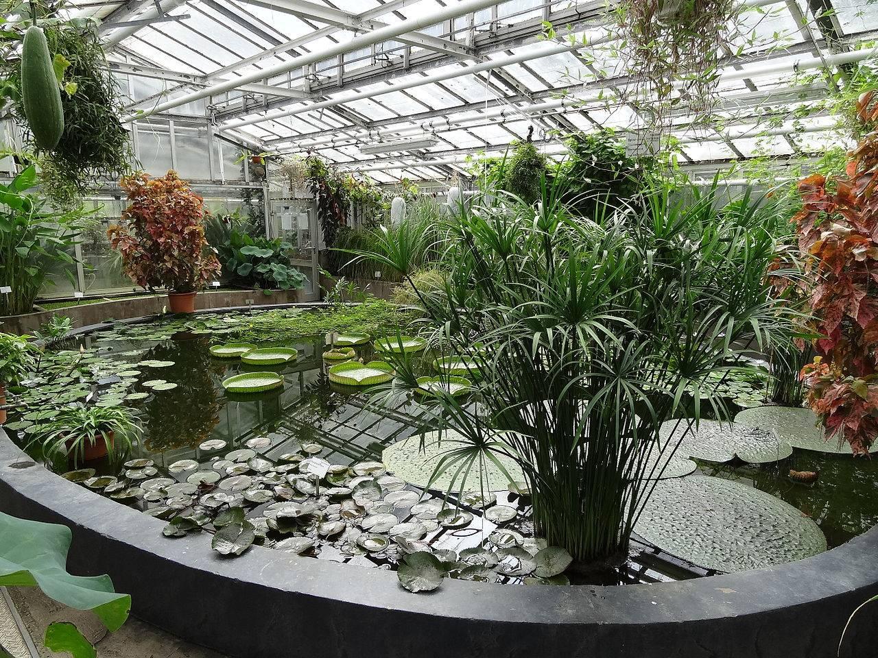 Топ-10 лучших ботанических садов мира