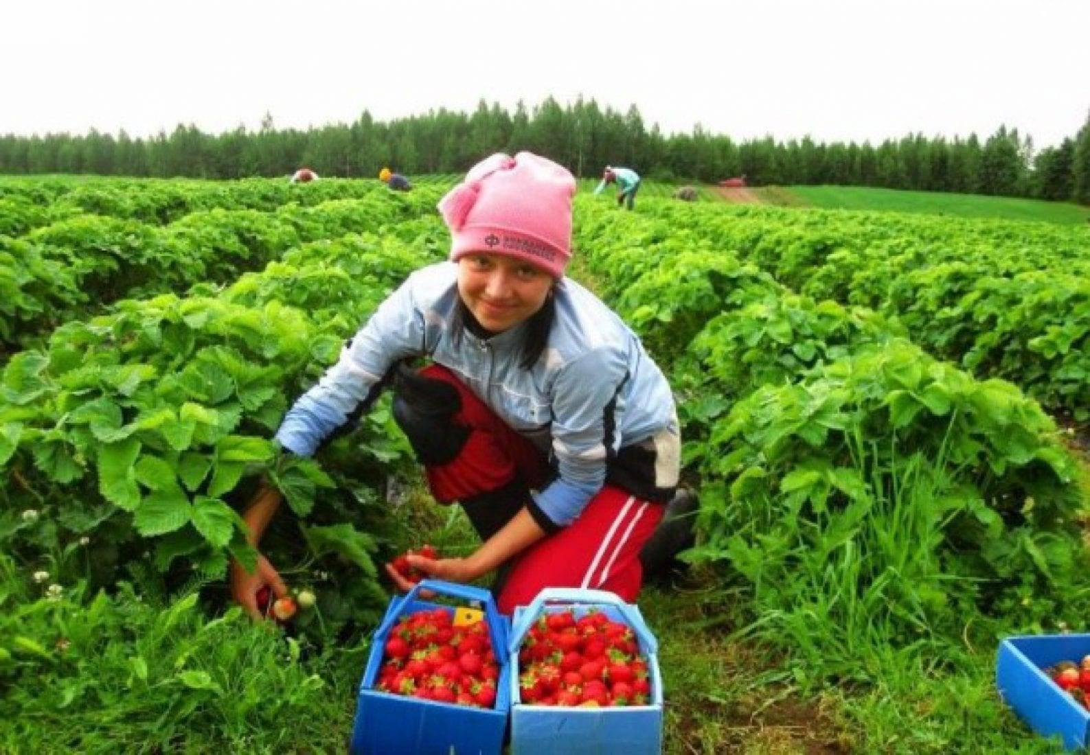 Как найти работу в польше для белорусов: вакансии