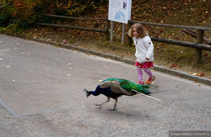 Дартмурский зоопарк — официальный сайт, режим работы и билеты 2021, где находится, как добраться |туристер.ру