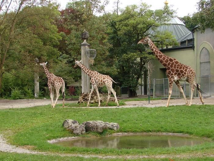 Лейпцигский зоопарк в германии: особенности, стоимость, животные