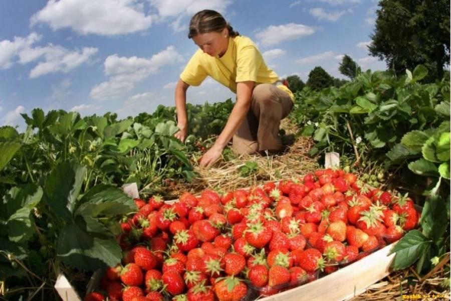 Работа в польше для белорусов, трудоустройство в польше в 2021 году