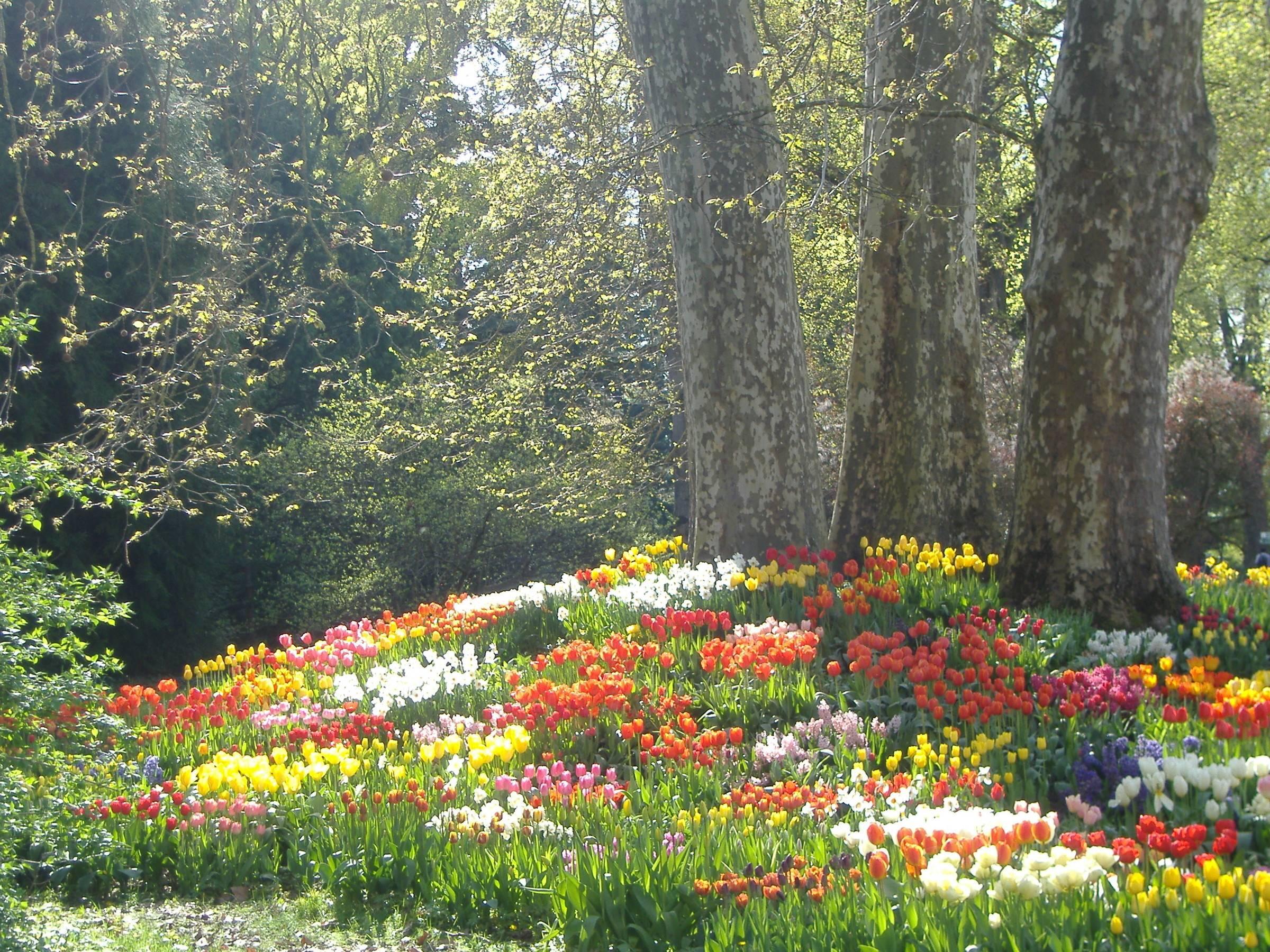 Германия. майнау: остров цветов