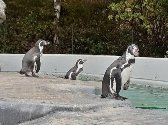 «страна енотия», минск. официальный сайт, цены 2021, животные зоопарка, контактный зоопарк в минске, как добраться, фото — туристер.ру.