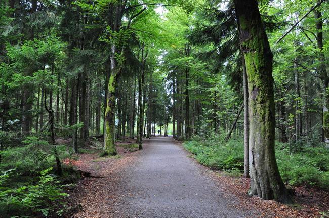 Природа германии (кратко)