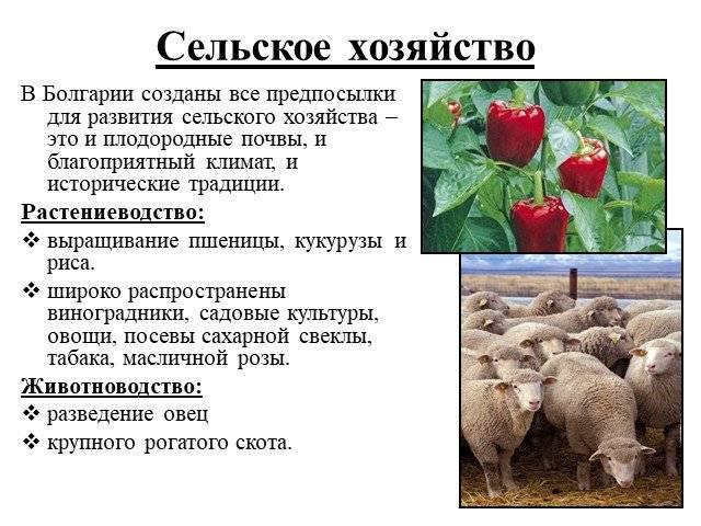 Экономика и ввп болгарии