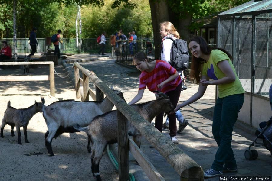 Дартмурский зоопарк