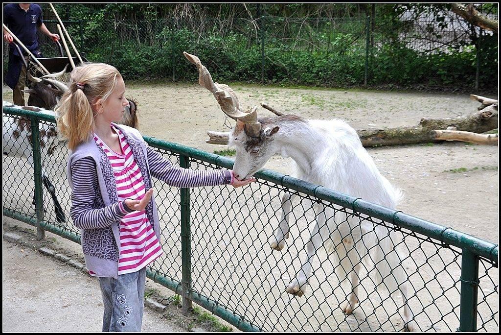 Зоопарк в мюнхене - путешествие по 5 континентам – так удобно!  traveltu.ru