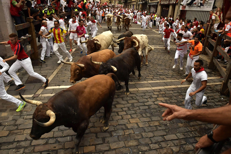 Бег быков - энсьерро: как убежать от быка и не облажаться