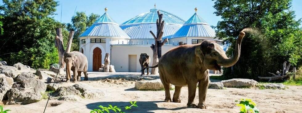 Мюнхенский зоопарк хеллабрунн