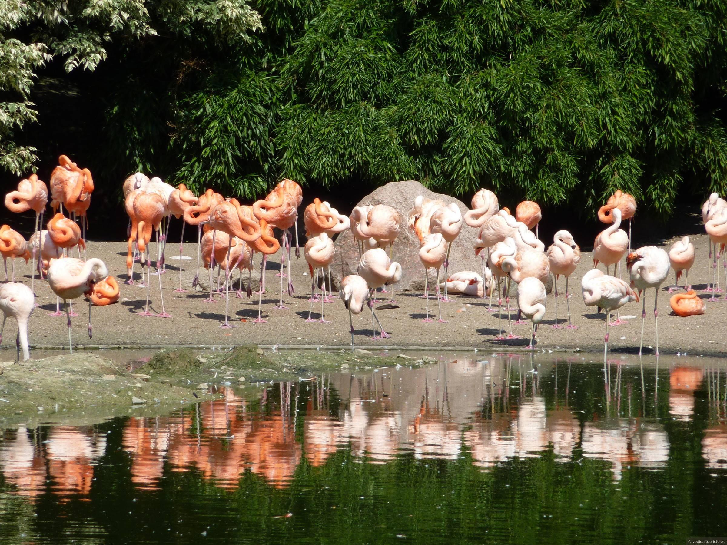 Занятие в средней группе «путешествие в зоопарк»