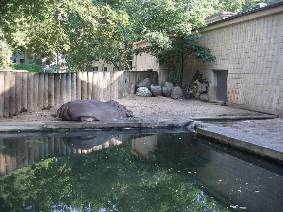Франкфуртский зоопарк - вики