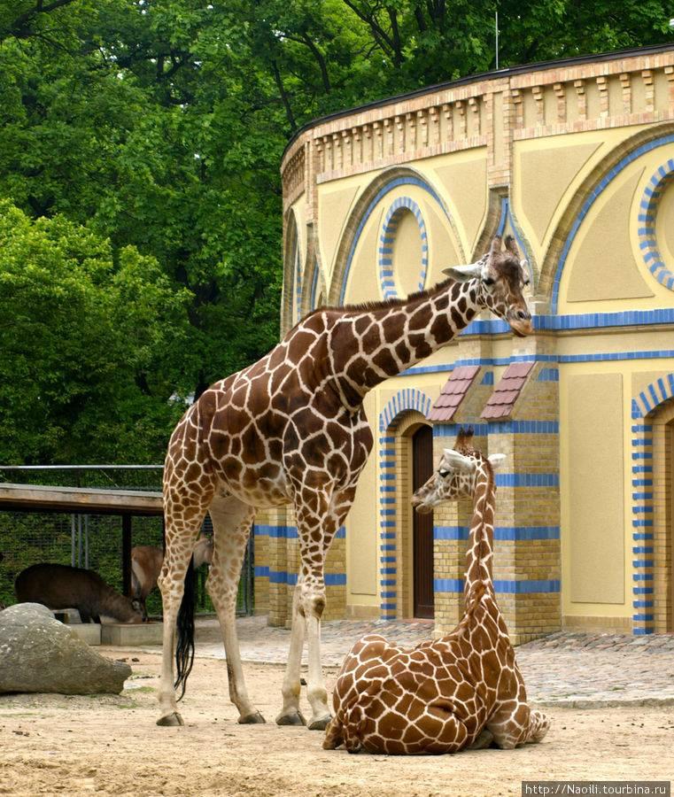 Немецкие зоопарки и зверинцы