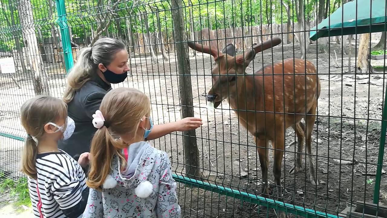 Лондонский зоопарк – царство зверей в великобритании