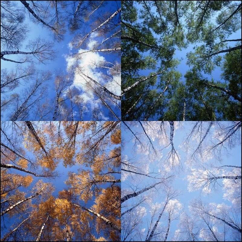 Метеорологические условия: понятие, определение условий, сезонные и суточные колебания, максимально и минимально допустимые температуры