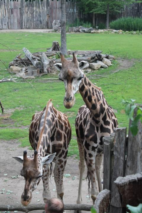 Берлинский зоопарк – старейший зоопарк в германии