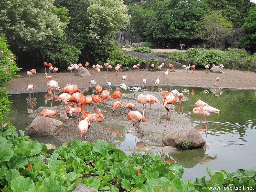 Лучшие зоологические парки планеты