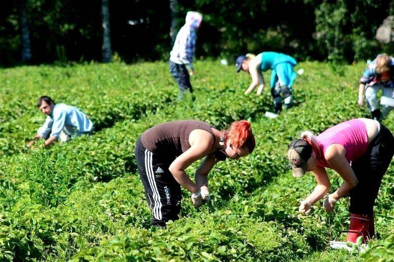 Работа в финляндии для украинцев, русских, белорусов, казахстанцев