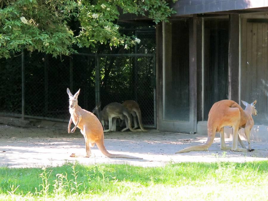 Чудо-зоопарк станет островом для животных с пяти континентов // нтв.ru