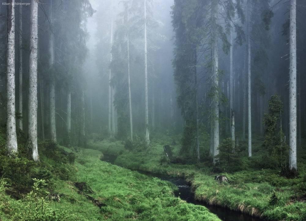 Национальный парк баварский лес (nationalpark bayerischer wald)