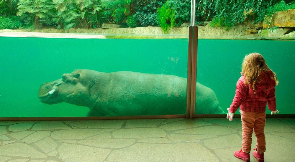 День в берлинском зоопарке