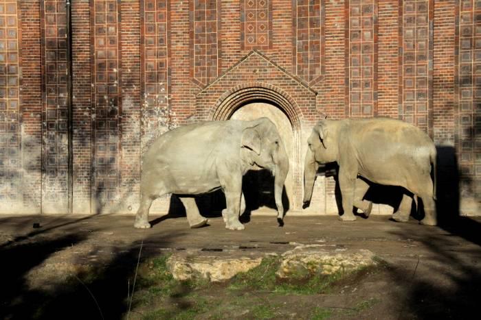 Лейпцигский зоопарк – прекрасный отдых для детей и взрослых