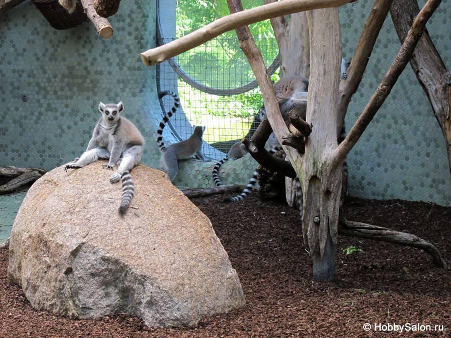 Мюнхенский зоопарк хеллабрунн (tierpark hellabrunn) - munchenguide