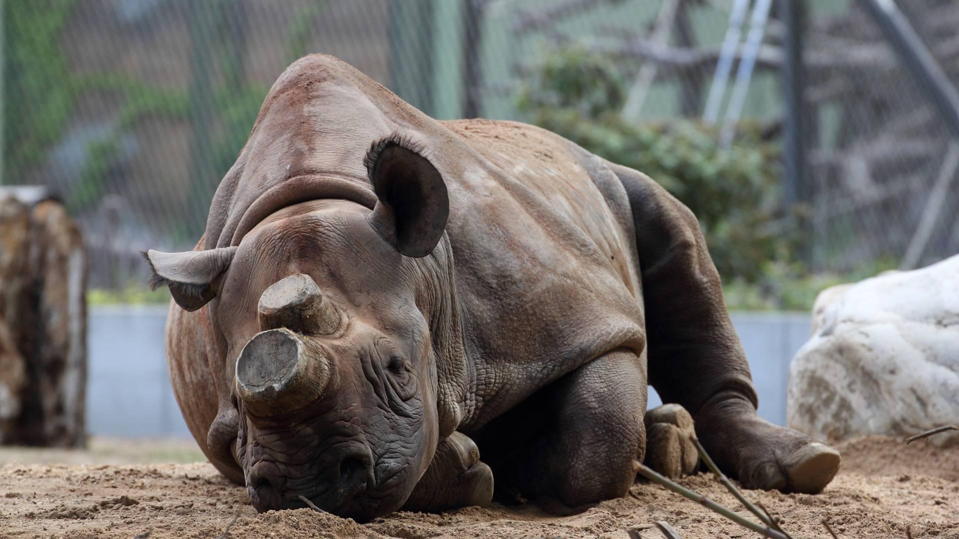 Франкфуртский зоопарк – место отдыха для всей семьи