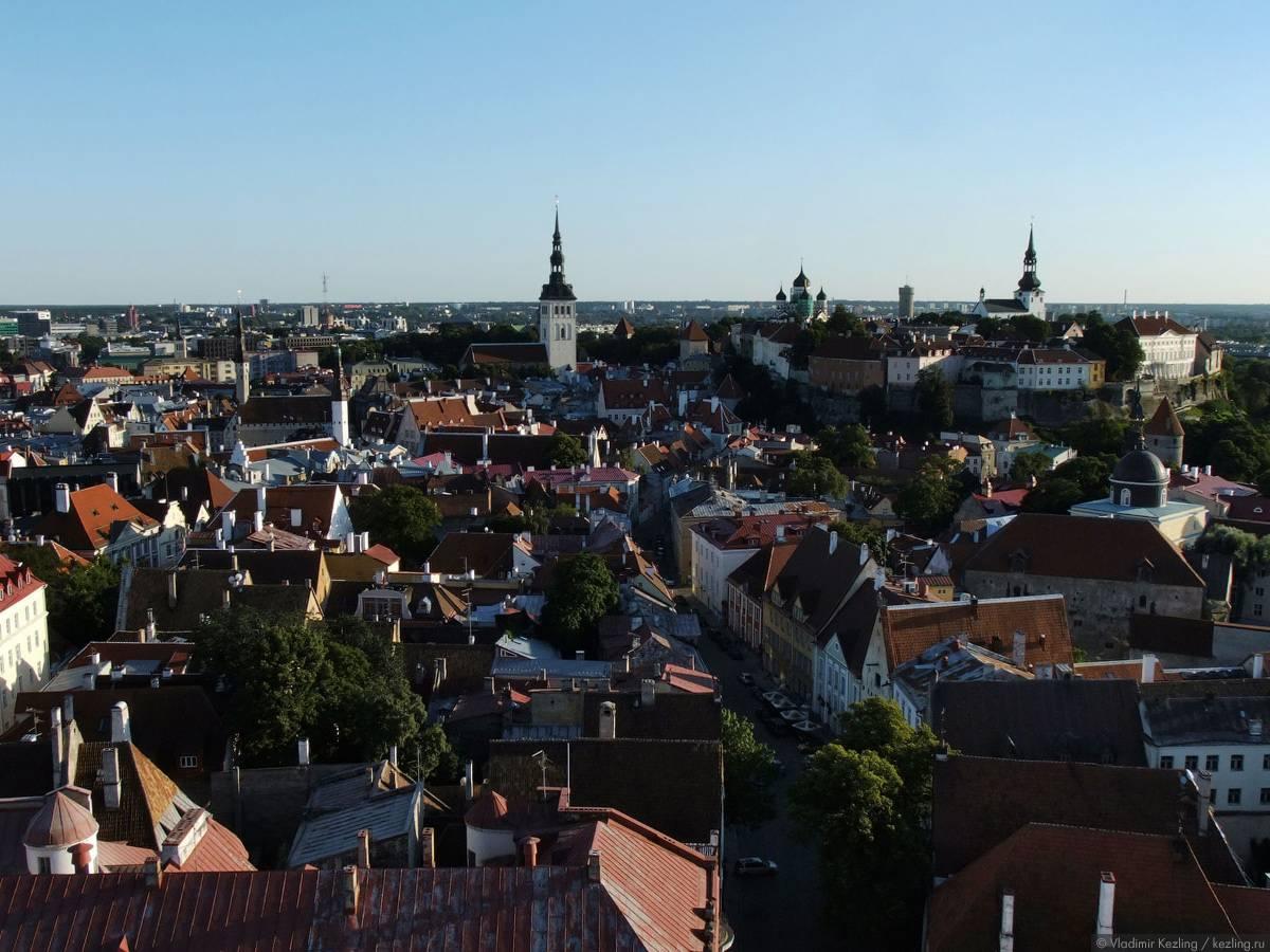 Самые востребованные профессии в эстонии в 2021 году
