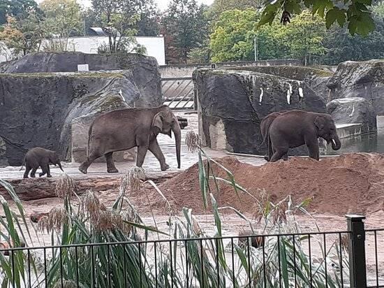 Трогательный зоопарк, ейск. цены 2021, фото, видео, отзывы, как добраться — туристер.ру