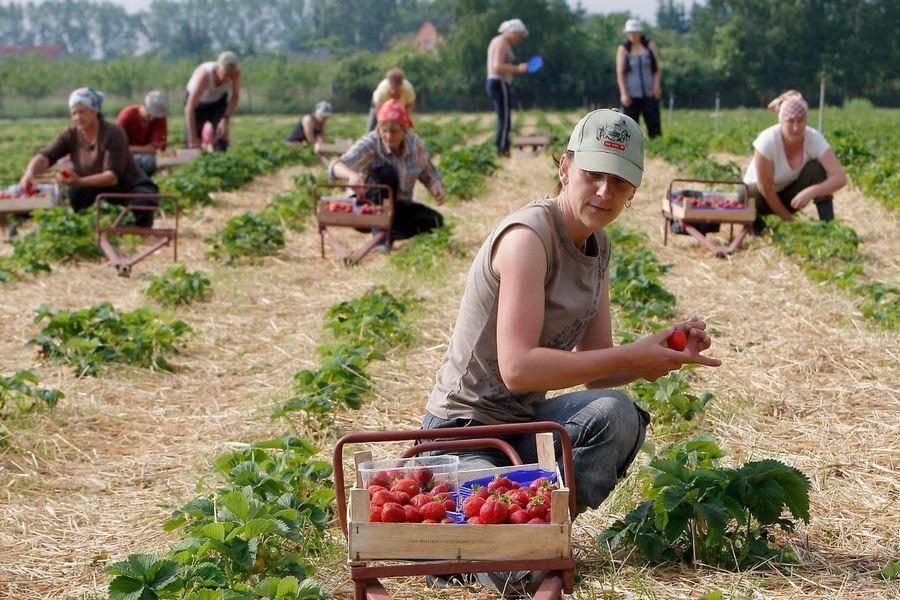 Как устроиться на сезонную работу в Польшу