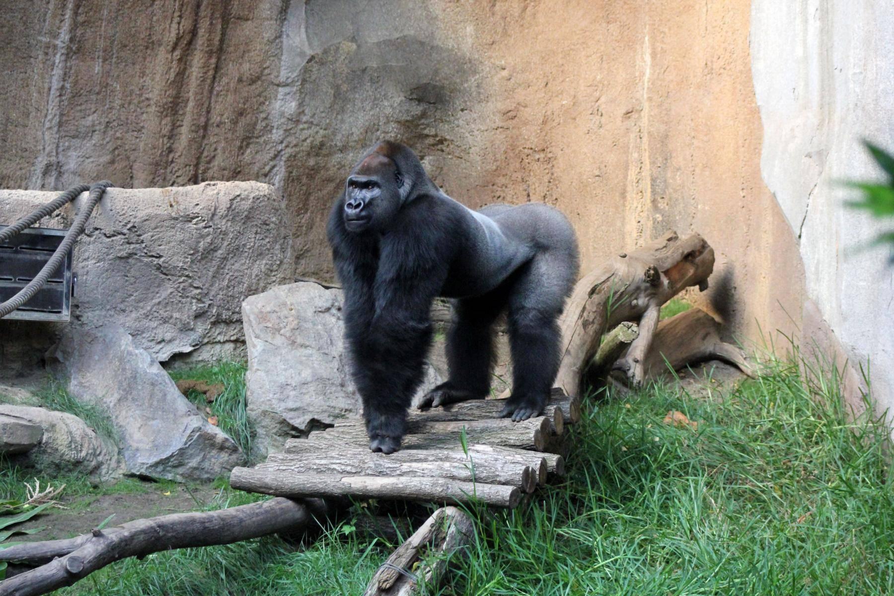 Берлинский зоопарк – на что смотрят 2,6 млн человек ежегодно