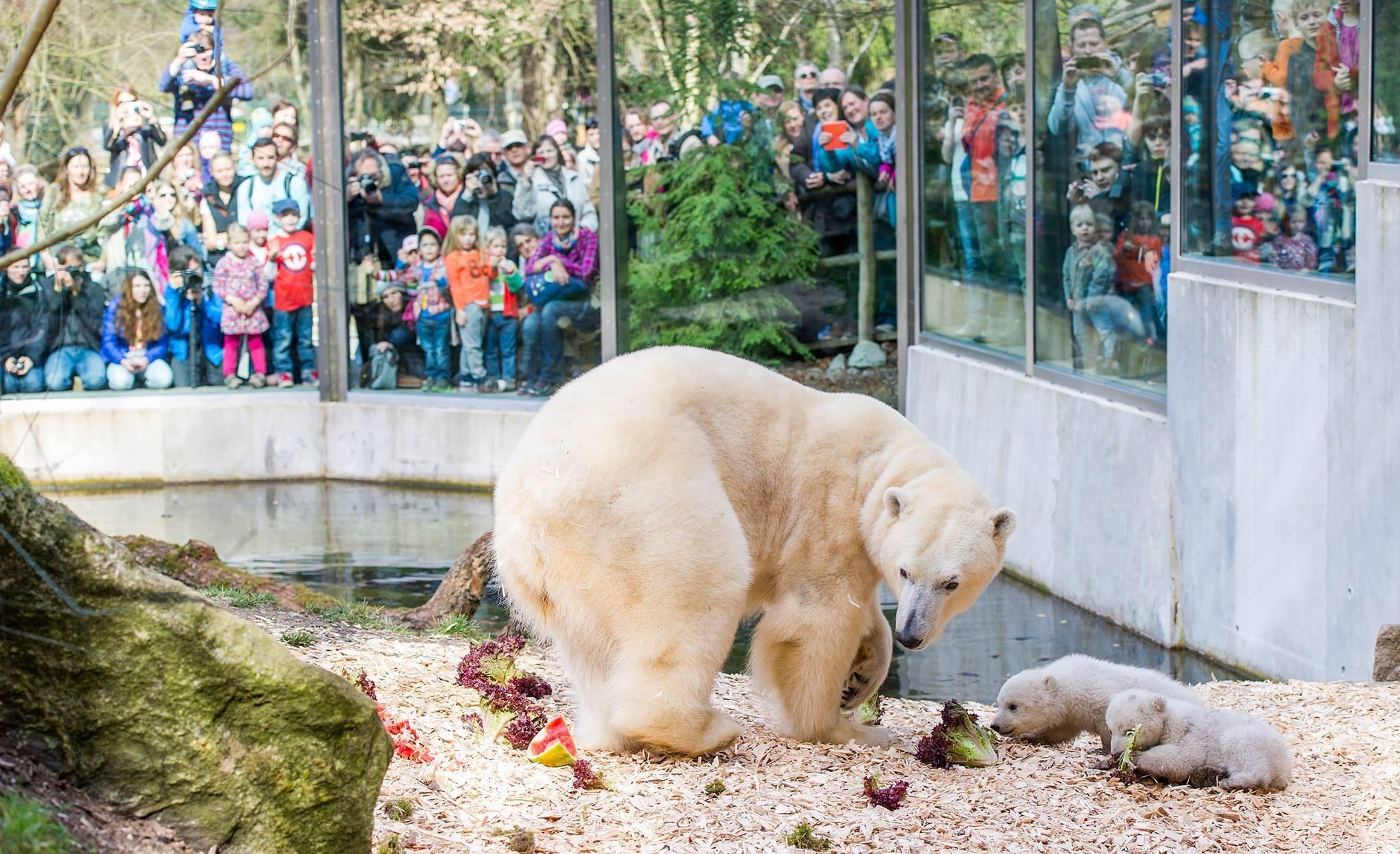 Зоопарк в мюнхене хеллабрунн - цены, часы работы, как доехать
