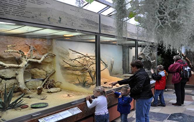 Франкфуртский зоопарк мирового уровня: каких животных можно увидеть