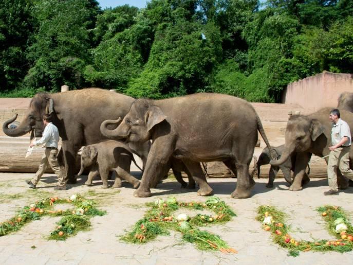 Дартмурский зоопарк — официальный сайт, режим работы и билеты 2021, где находится, как добраться  туристер.ру