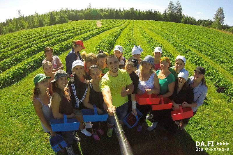 Работа в финляндии – особенности