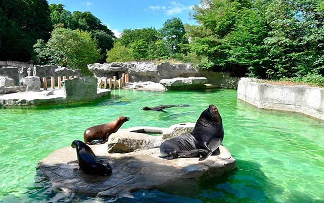Московский зоопарк — цены на билеты 2021, режим работы, как добраться